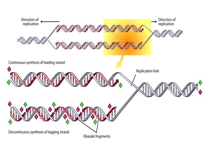 blog__inline--logic-of-dna-replication-makes-case-for-intelligent-design-4