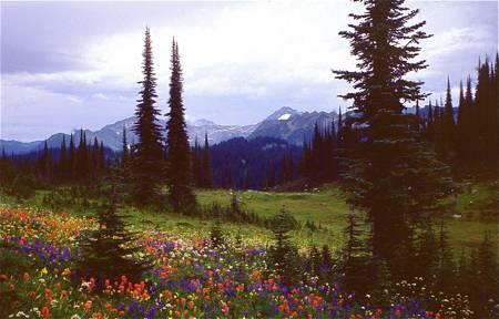 blog__inline--thank-god-for-flowers-1