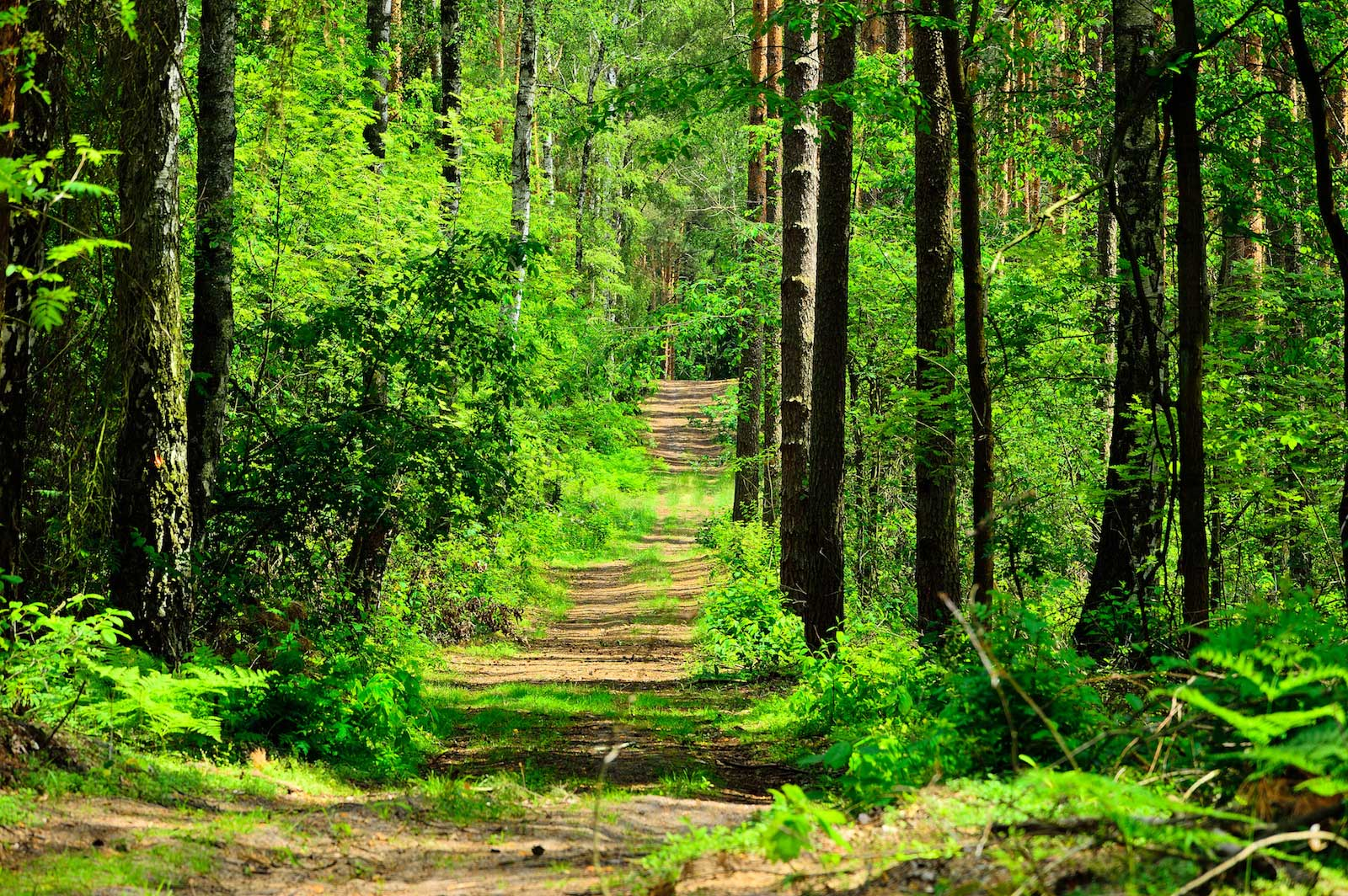 A Forest Stroll is Good for Body and Soul