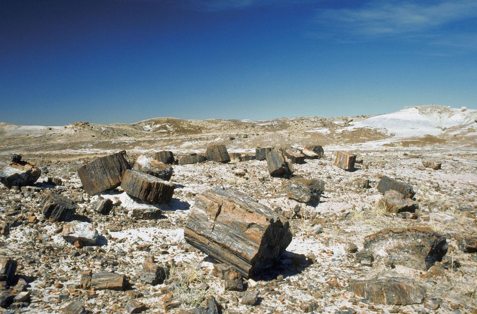 Science News Flash: 3.7-Billion-Year-Old Fossils Perplex Origin-of-Life Researchers