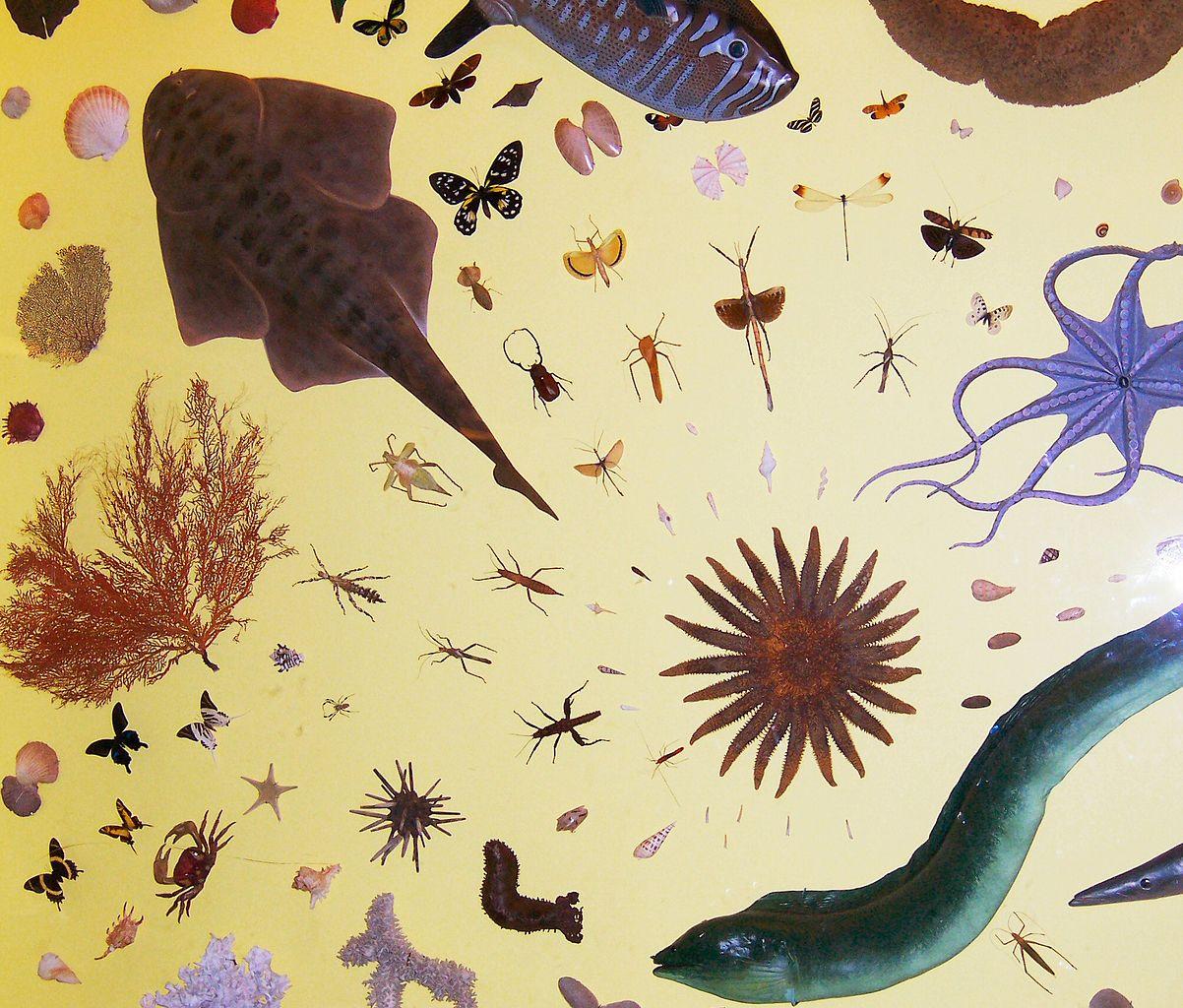 Biological Convergence Challenges Naturalistic Evolution Models