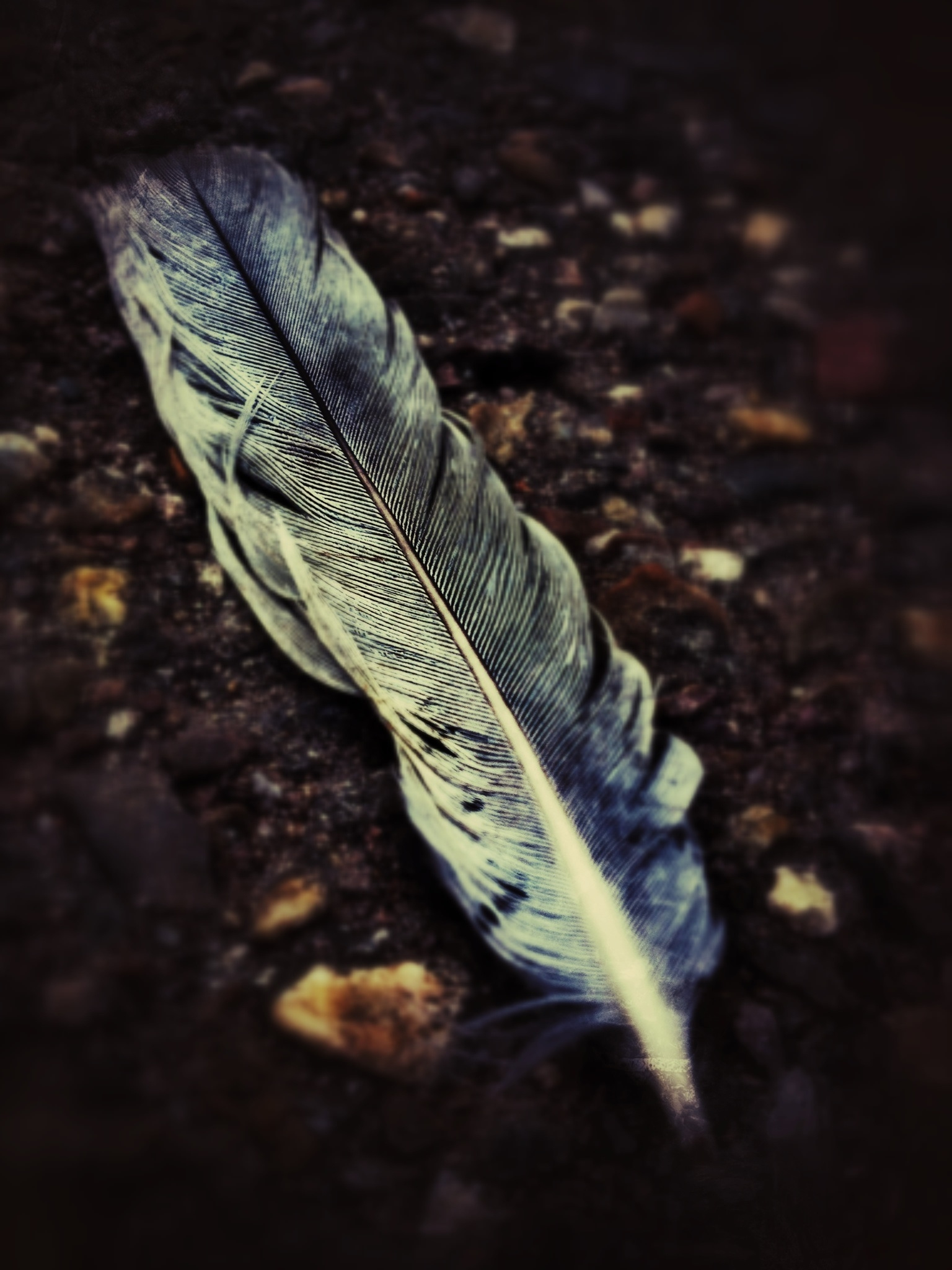 Can Keratin in Feathers Survive for Millions of Years?