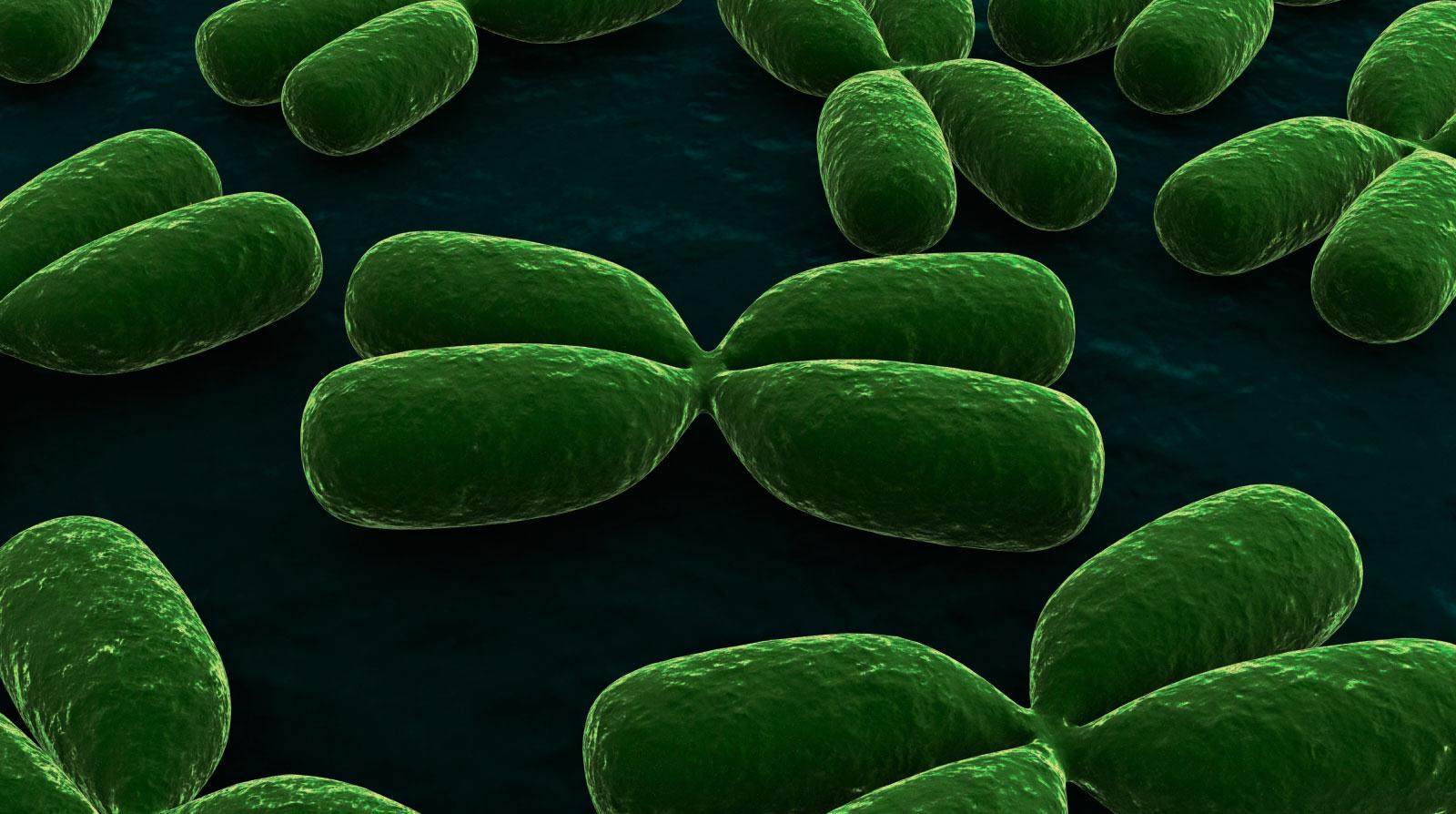 Chromosome 2: The Best Evidence for Evolution?