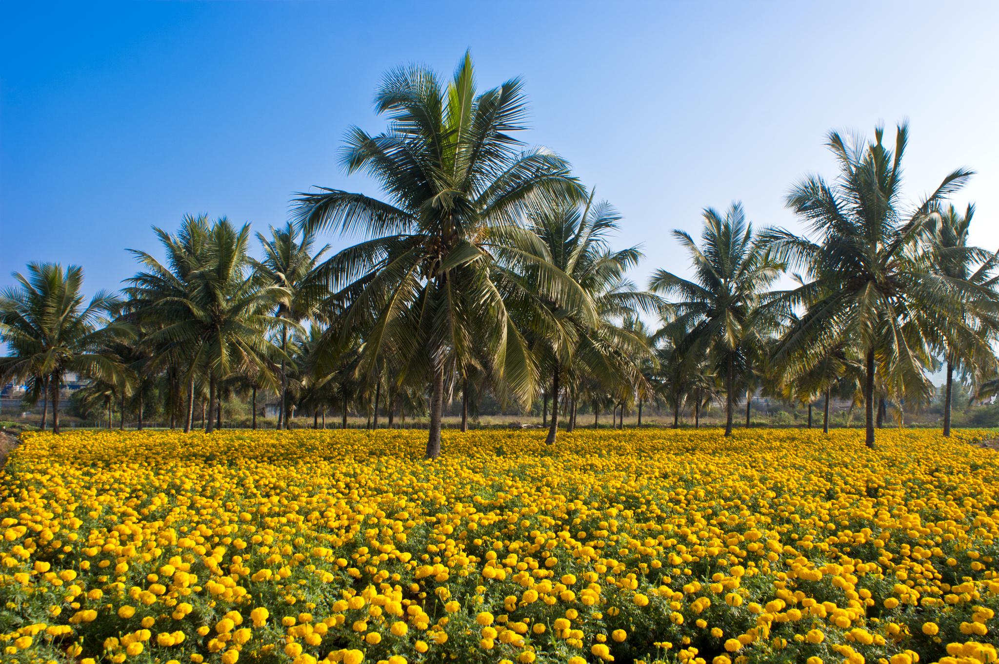 Earth's Biodiversity Benefits All Life