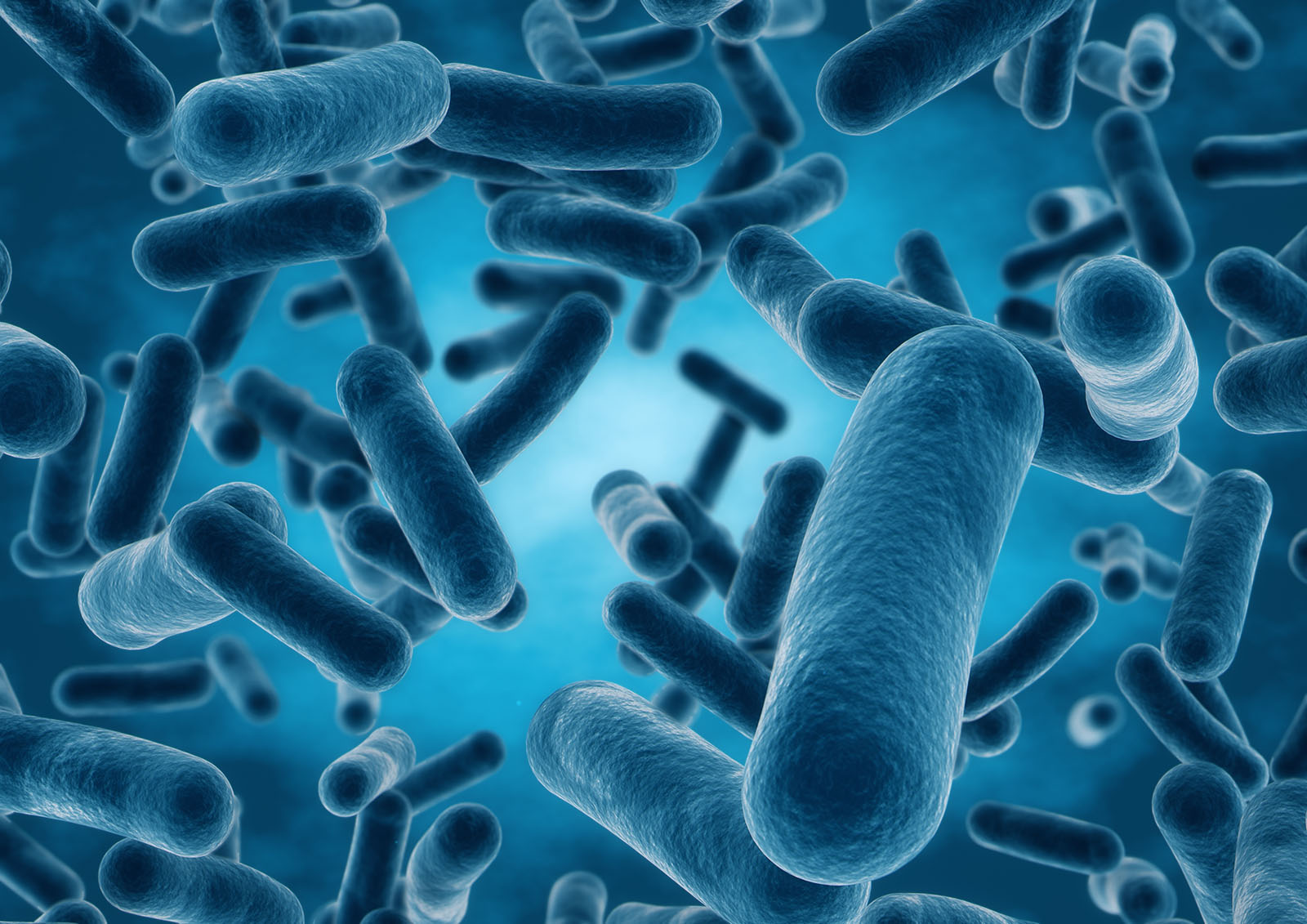 How Bacteria Train Our Immune System