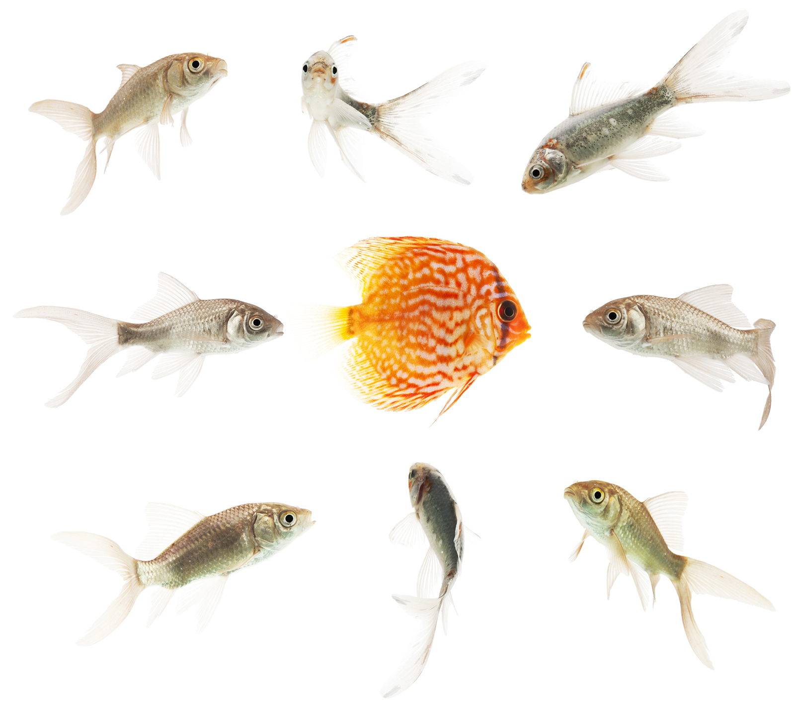 Like a Fish Out of Water: Why I'm Skeptical of the Evolutionary Paradigm