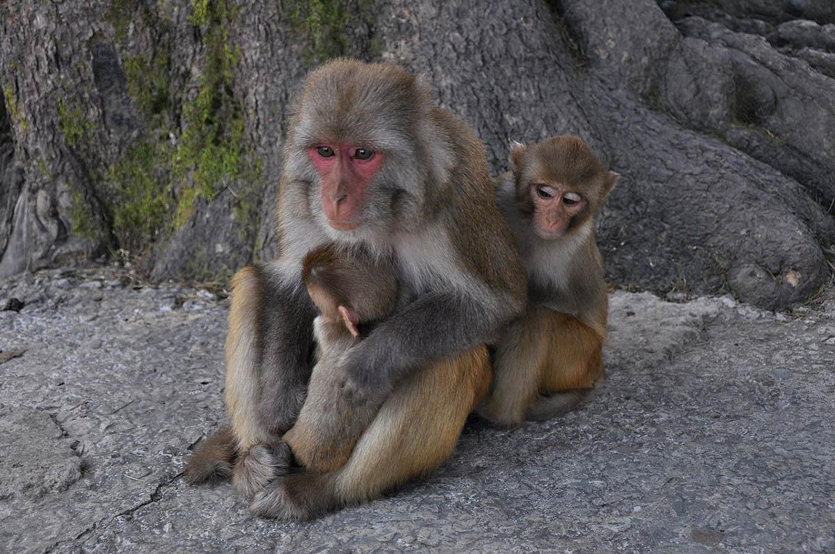 Monkey Business: Evolutionists' Oversight