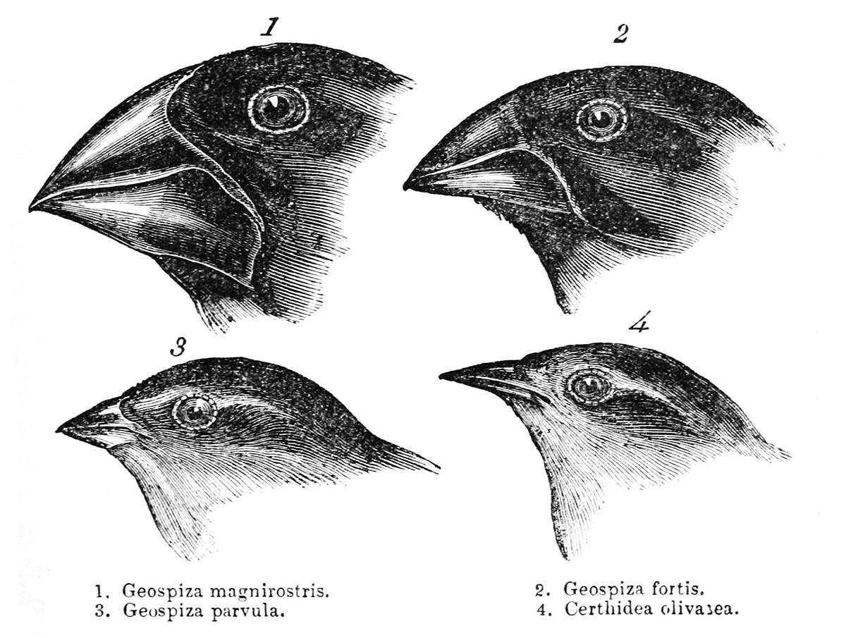 Natural Selection: Driver of Evolution or Stasis?