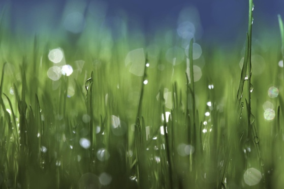 Photosynthesis Reveals Quantum Design