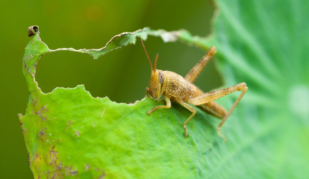 Plant-Predator Symbiosis: Ubiquitous Evidence for Creation