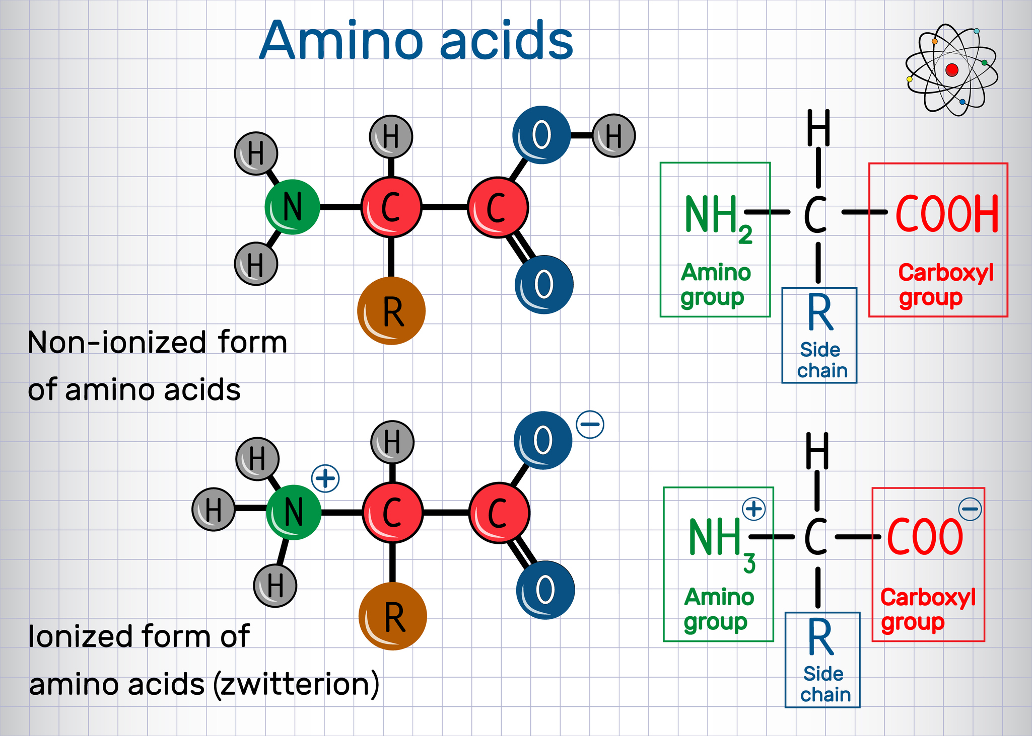 "Protein Amino Acids Form a ""Just-Right"" Set of Biological Building Blocks"