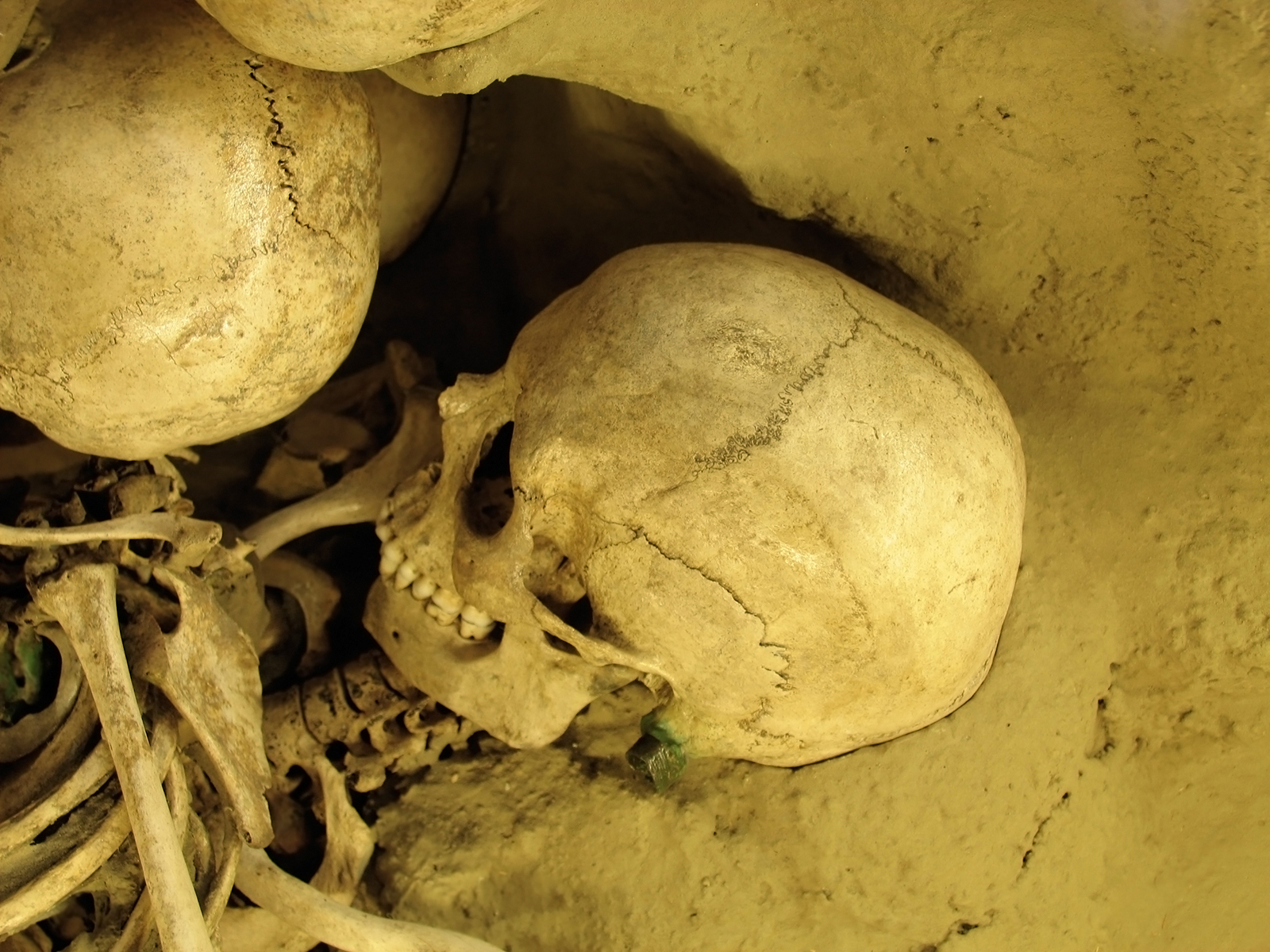 Rabbit Burrowing Churns Claims about Neanderthal Burials