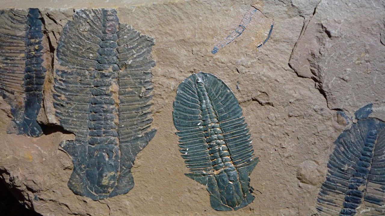 The Cambrian Explosion and Evolutionists' Responses