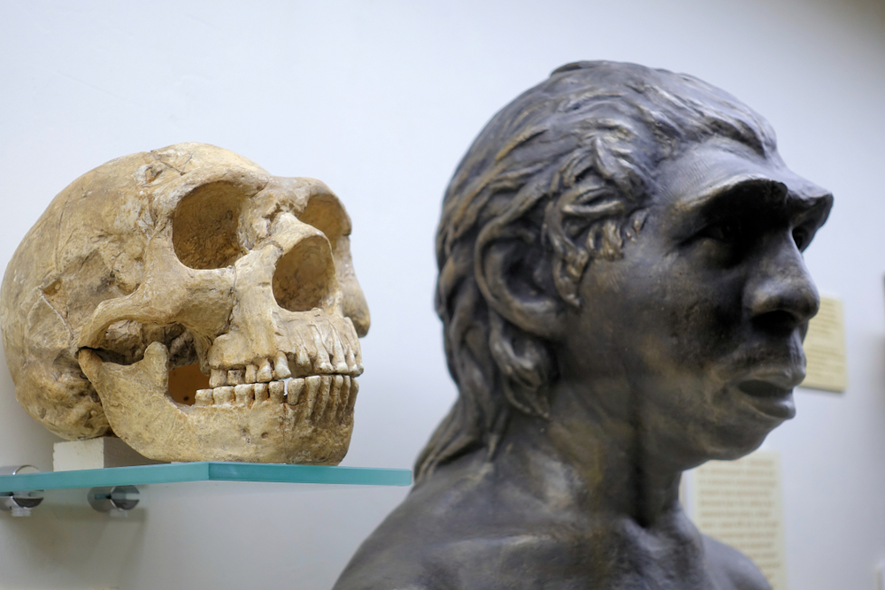 Timing of Neanderthals' Disappearance Makes Art Claims Unlikely
