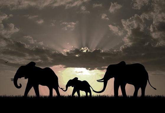 Animals in the Spotlight