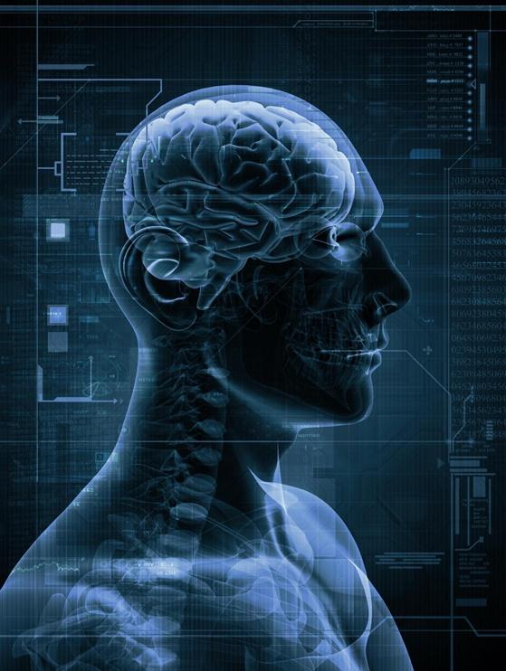 New Brain Study Spoils Evolutionary Drama