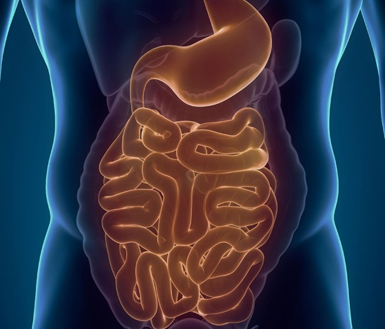 The Human Appendix: What Is It Good For?