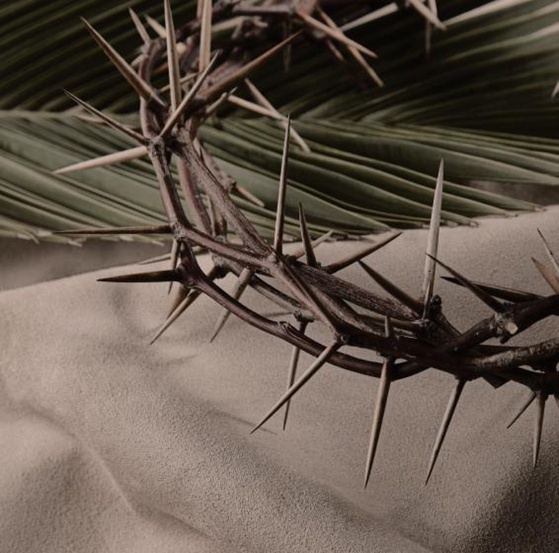 Thoughts on Palm Sunday