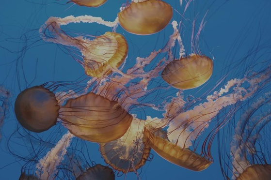 Whales, Jellies, and Fish–Oh, My!