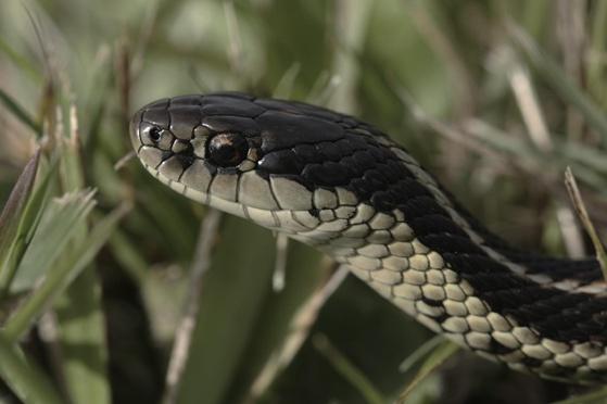 """You Might Soon Say """"I Heart Snakes"""""""