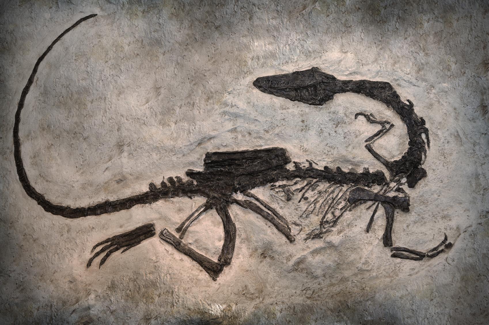 Genomic Data, the Fossil Record, and Bioinformatics
