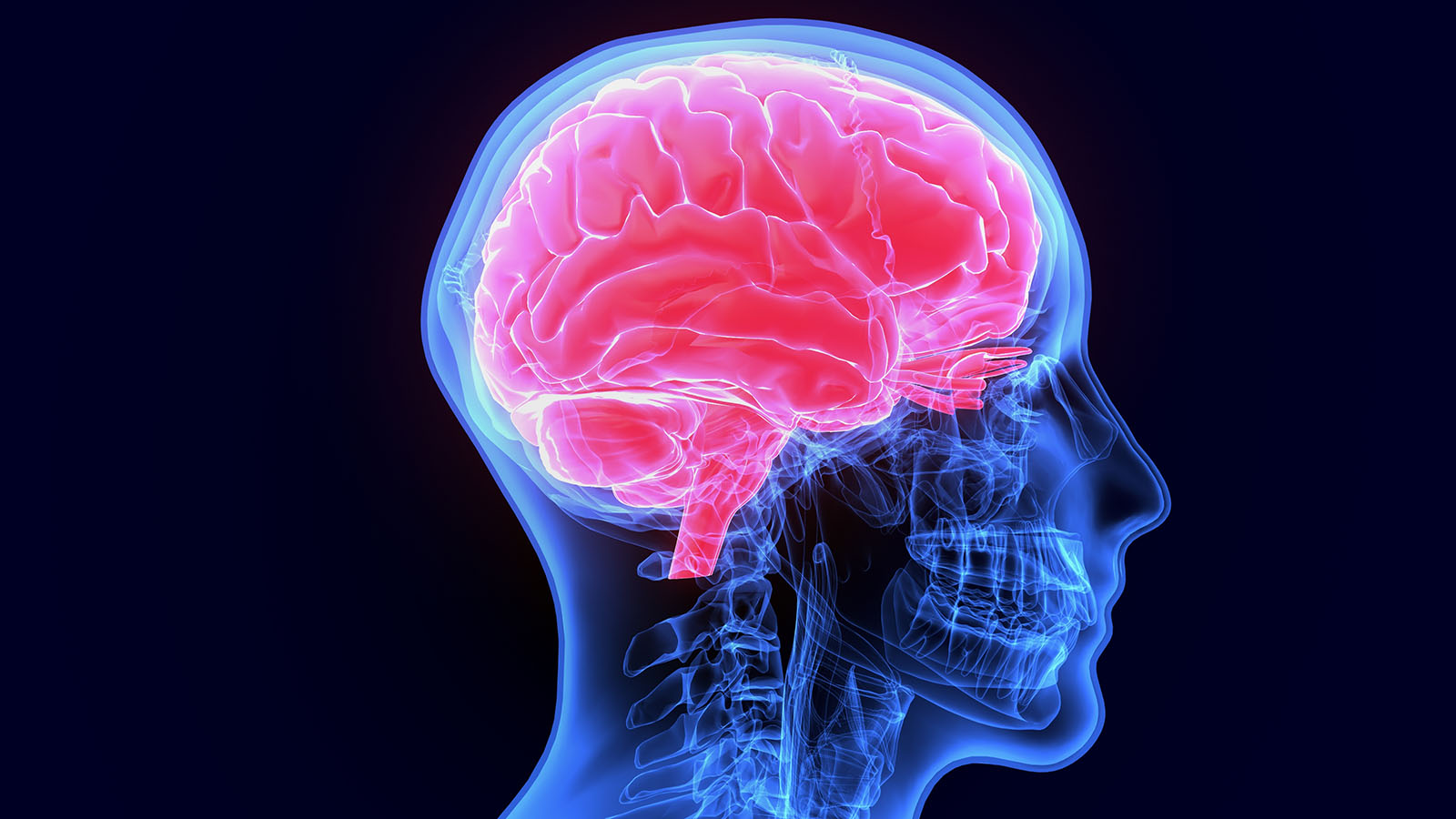 Newly Mapped Area of the Human Brain: Evidence for Exceptionalism?