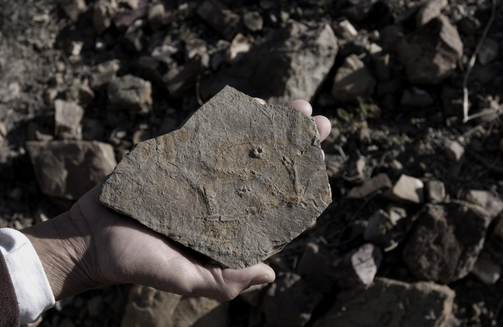 Pikaia Fossils Explode the Evolutionary Paradigm