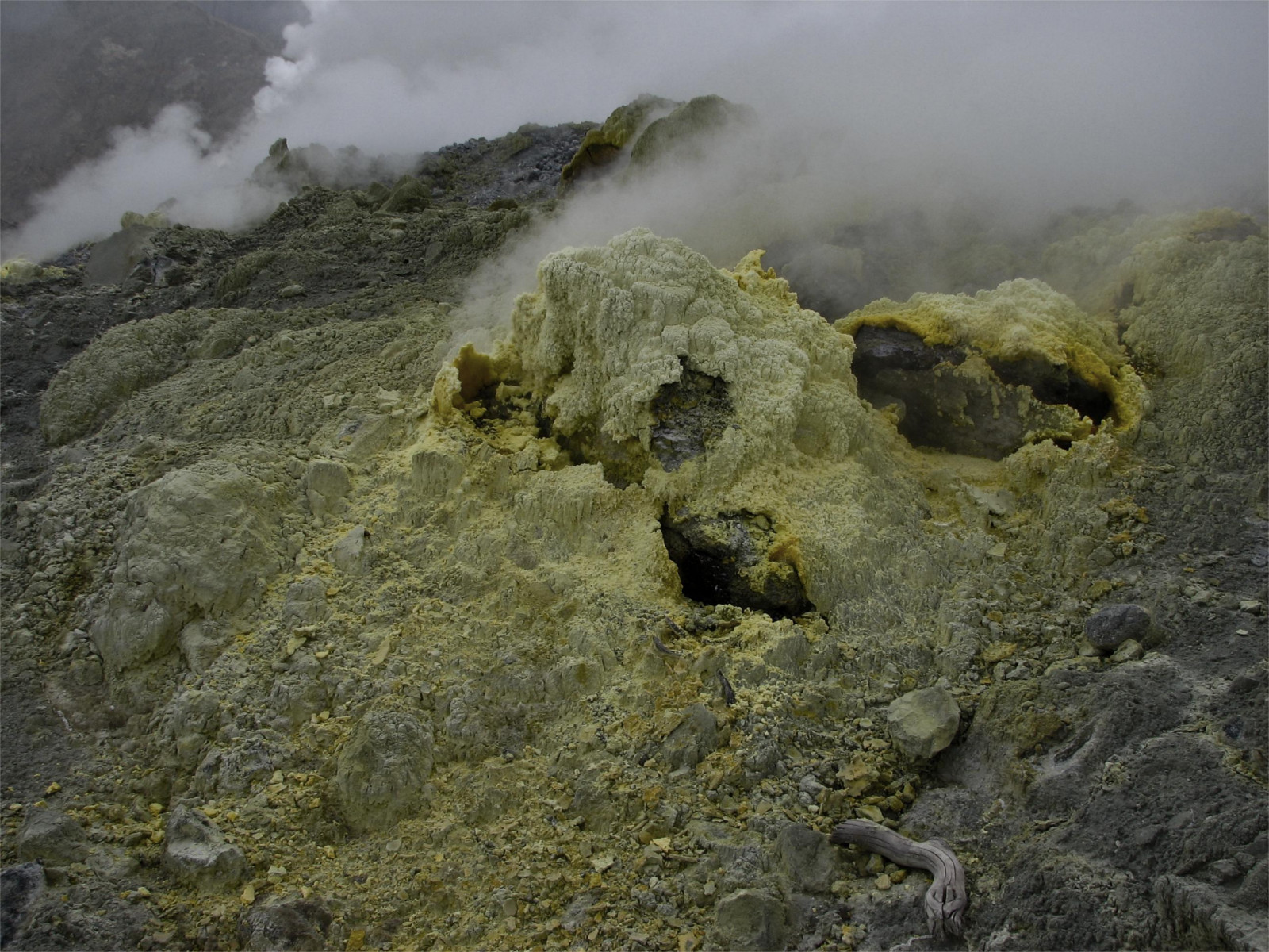 Sulfur Caused Early Life to Sprout