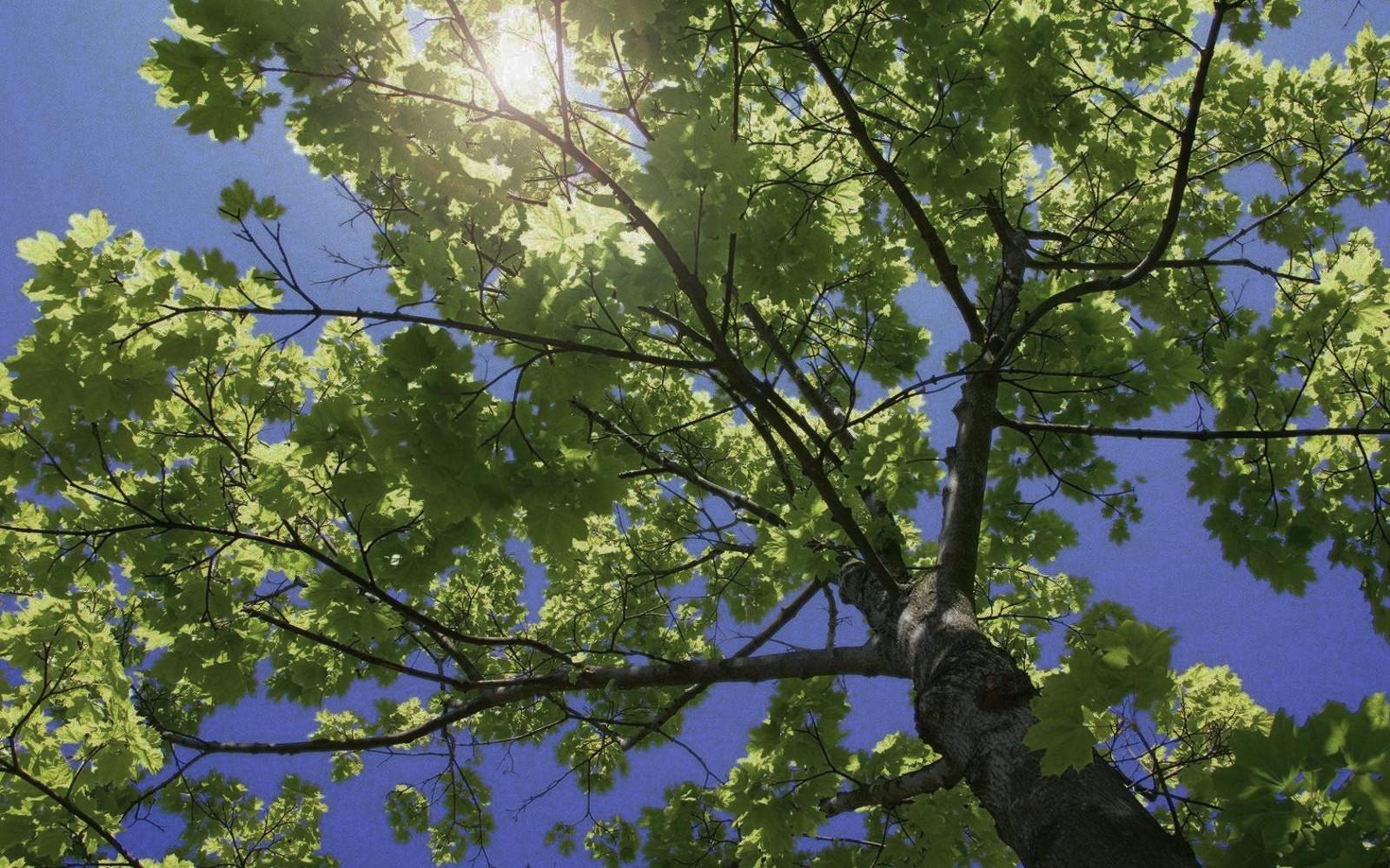TNRTB Classic: A Tangled Evolutionary Tree