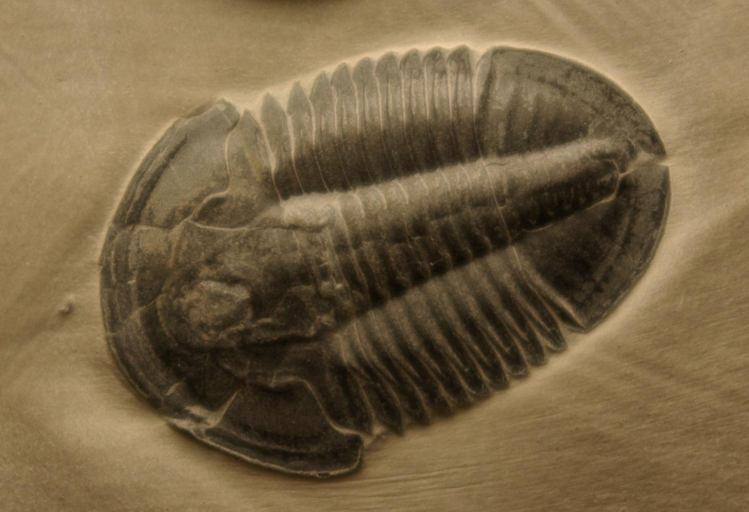TNRTB Classic: Skeletons in the Cambrian Explosion