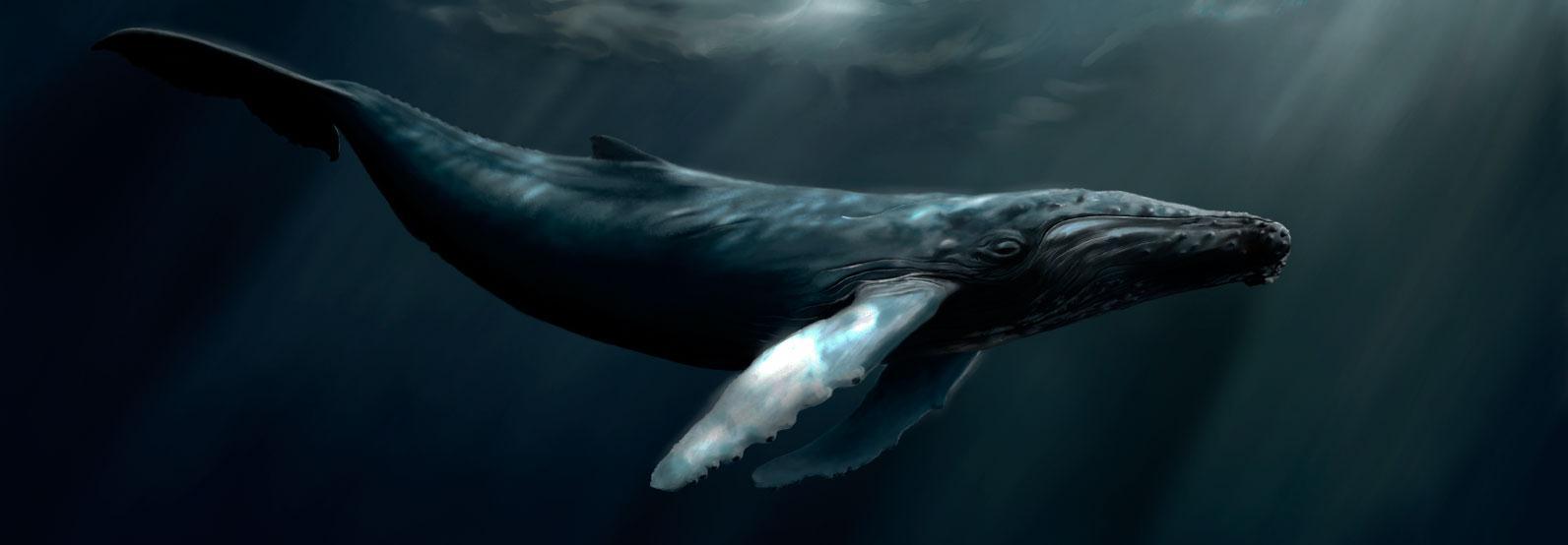 TNRTB Classic: Sperm Whales