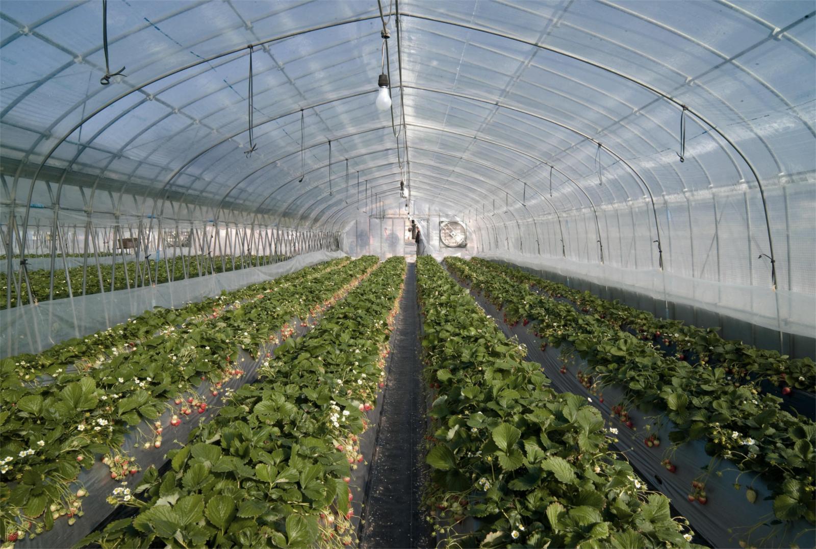 TNRTB Classic: The Greenhouse Effect