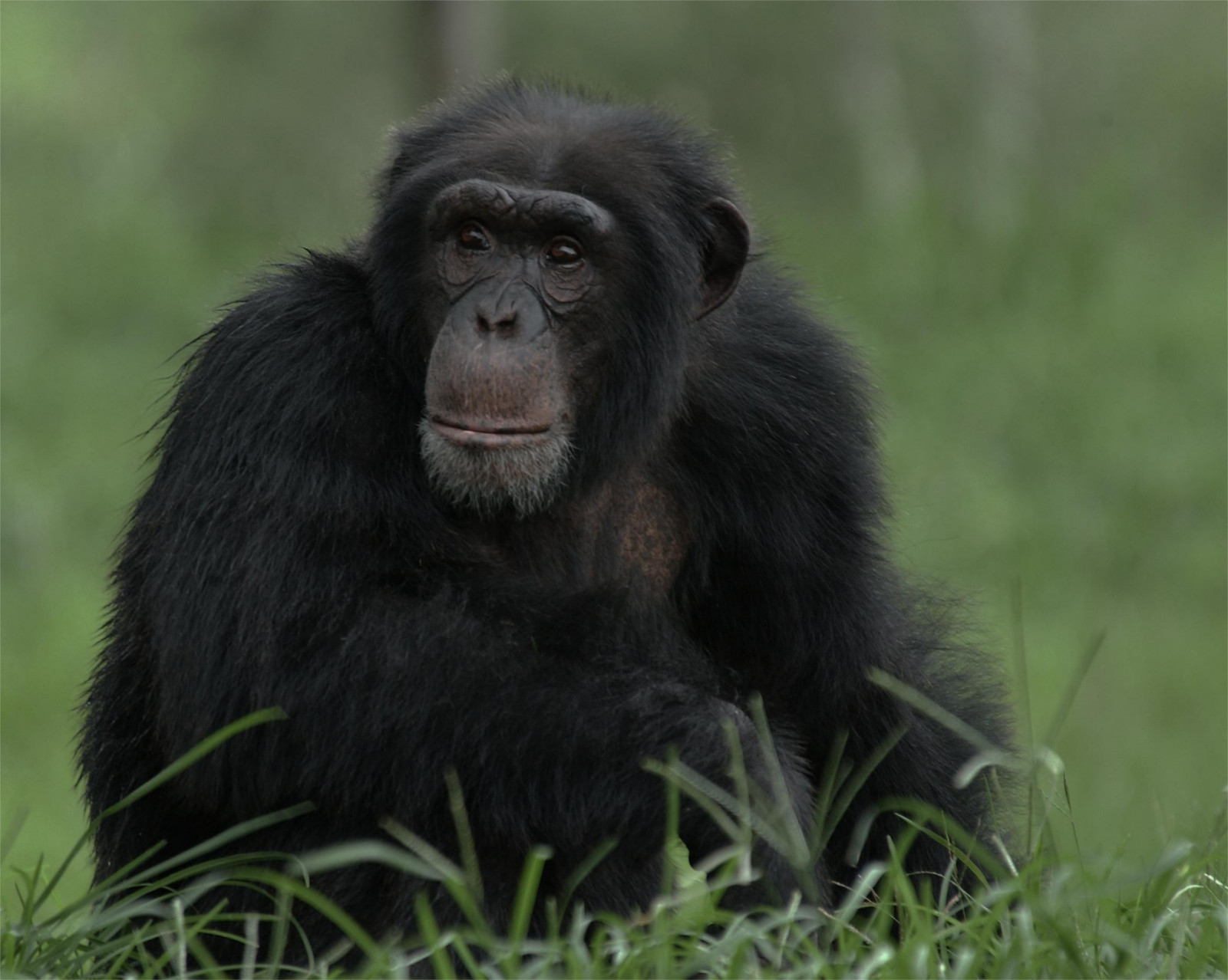 Yet Another Genetic Difference between Humans and Chimpanzees