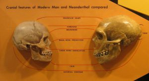 blog__inline--answering-scientific-questions-on-neanderthal-human-interbreeding-part-1