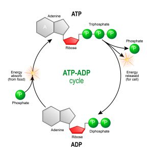 blog__inline--atp-transport-challenges-3