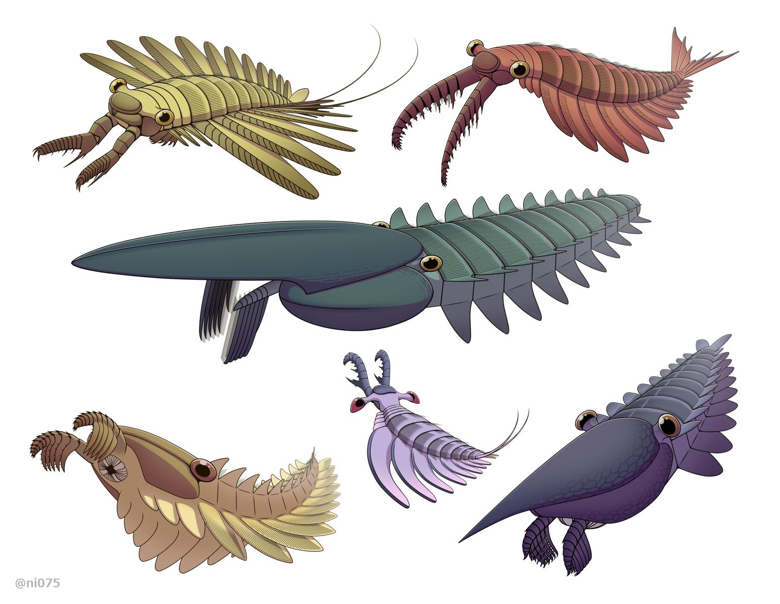 blog__inline--cambrian-creatures-diverse-1