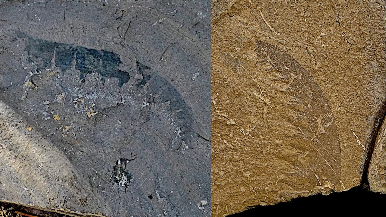 blog__inline--cambrian-creatures-diverse-2