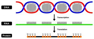 blog__inline--competitive-endogenous-rna