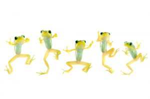 blog__inline--frog-choruses-sing-out-a-song-of-creation-1