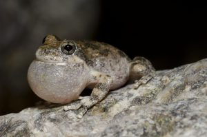 blog__inline--frog-choruses-sing-out-a-song-of-creation-2