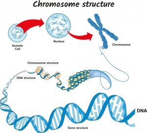 blog__inline--genome-code-builds-the-case-for-creation-2