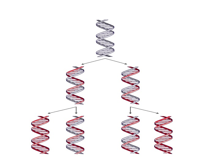 blog__inline--logic-of-dna-replication-makes-case-for-intelligent-design-3