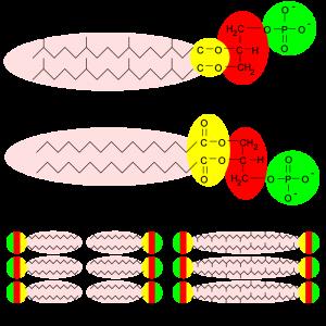blog__inline--membrane-biochemistry-challenges