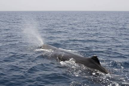 blog__inline--thank-god-for-whales-1
