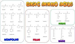 blog__inline--the-optimal-design-of-the-genetic-code-1