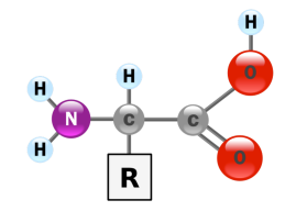 blog__inline--why-these-20-amino-acids-1