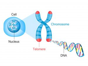 blog__inline--yeast-gene-editing-study-2