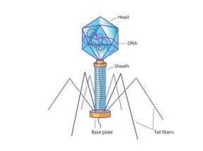 Virus Graphic