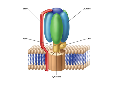tnrtb__inline--bacterial-flagellum-structure-stacks-the-case-for-intelligent-design-3