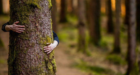 Christian Environmentalism in an Age of Bobos